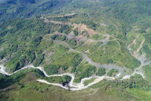 Pembangunan Jalan Trans-Papua : Terancamnya Flora dan Fauna